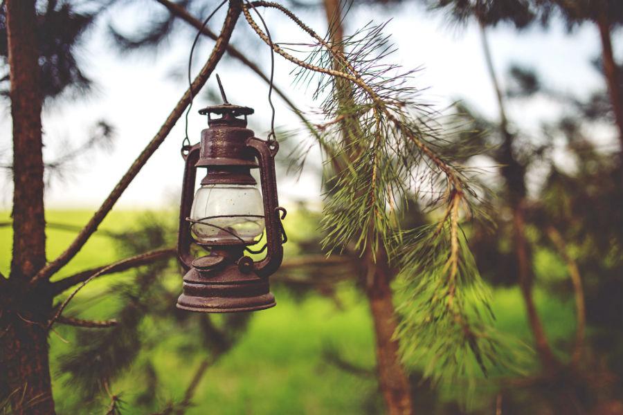 lantern on a tree