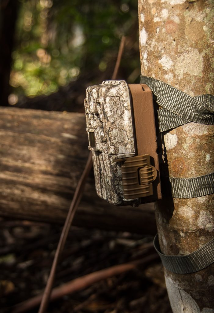 how do trail cameras work in t