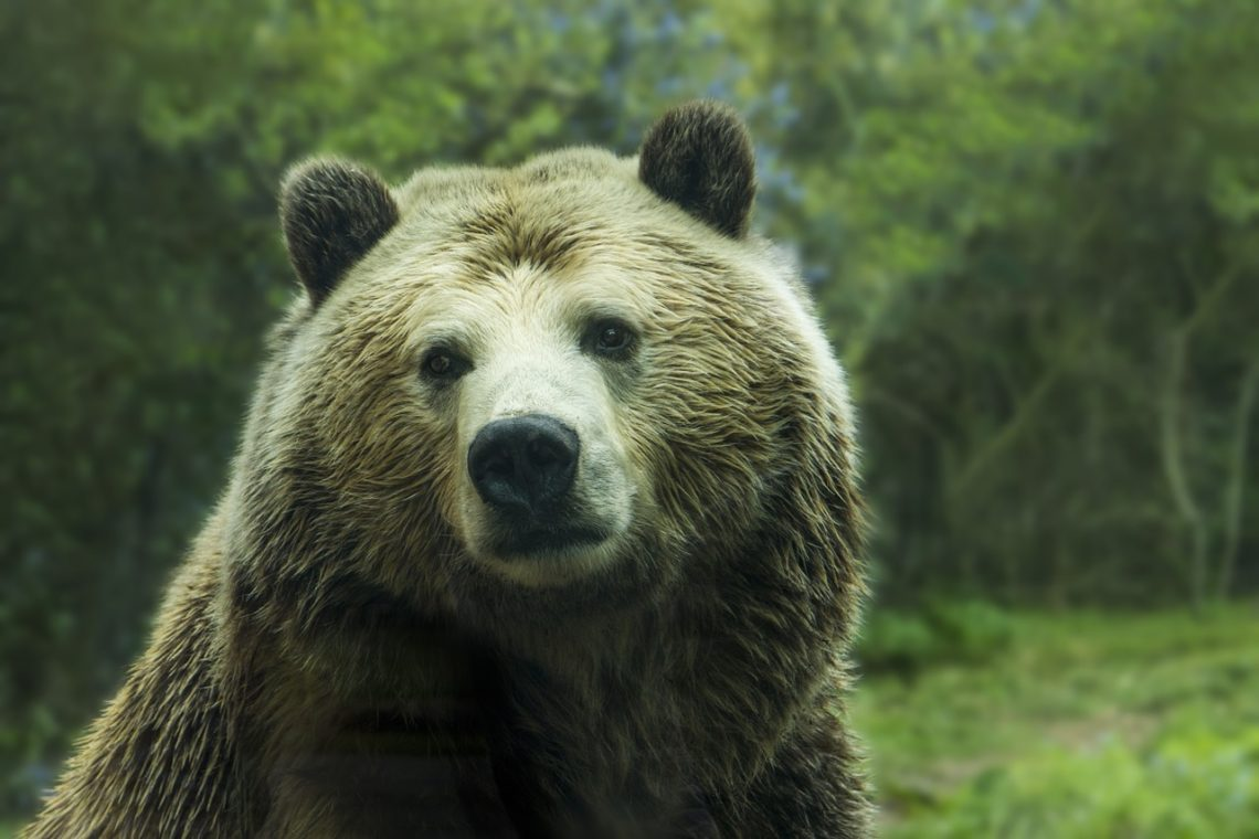 camping survival guide bear